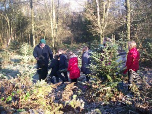 Pupils learn the their Firs from their Spruces from Will